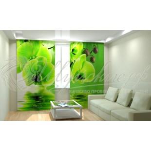 Фотошторы Зеленые орхидеи фото