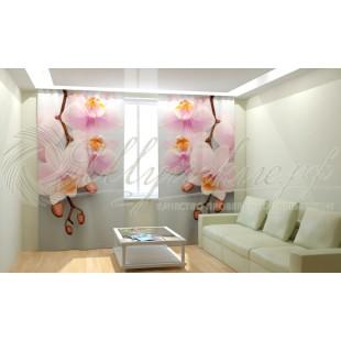 Фотошторы Строгие орхидеи фото