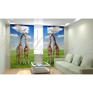 Фотошторы Жирафы на лугу фото